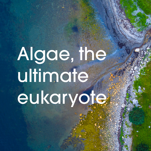 AlgaeTile